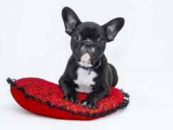 Dog DNA Dog Breed Testing