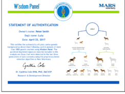 Wisdom Panel 4.0 Canine DNA Test
