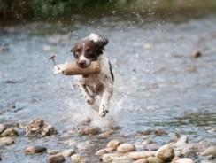 EasyDNA Dog Inherited Disease & Trait Test