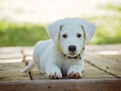 EasyDNA My Dog Breed Test