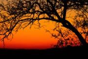 African Ancestry – PatriClan DNA Test Kit