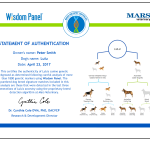 Wisdom Panel DNA Canine Test
