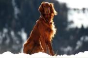 DNA Diagnostics Center – Veterinary DNA Test – Canine – Dog Breed