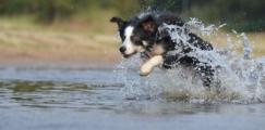 EasyDNA Dog DNA Parentage Test
