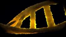 Full Genomes Corporation – GenomeGuide