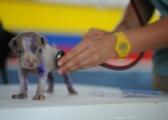 DNA Diagnostics Center – Veterinary DNA Test – Canine – Inherited Disease Test