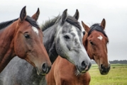 DNA Diagnostics Center – Veterinary DNA Test – Equine – Parentage Verification