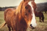 DNA Diagnostics Center – Veterinary DNA Test – Equine – DNA Profiling