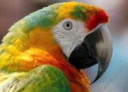 EasyDNA Avian DNA sexing