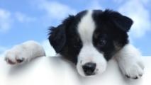 DNA Worldwide – Dog Parentage DNA Testing