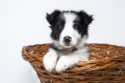 EasyDNA Dog DNA Testing without the Mother
